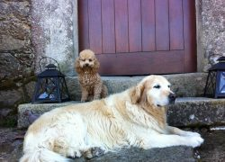 017_casa Bachao admite mascotas perros
