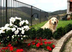 05_Casa Grande Bachao admite perros